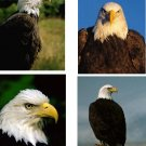 Lot Of 4 Eagle Bird Fabric Panel Quilt Squares