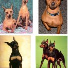 Lot Of 6 Miniature Pinscher Dog Fabric Panel Quilt Squares