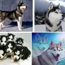 Lot Of 6 Siberian Husky Dog Fabric Panel Quilt Squares