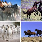 Lot Of 12 Horses Fabric Panel Quilt Squares