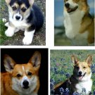 Lot Of 12 Pembroke Welsh Corgi Dog Fabric Panel Quilt Squares