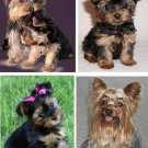 Lot Of 4 Yorkshire Terrier Dog Fabric Panel Quilt Squares