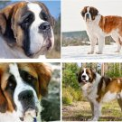 Lot Of 4 Saint Bernard Dog Fabric Panel Quilt Squares