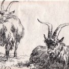 Nicholas Berchem -Animalia - Sheep at Rest - Etching