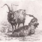 Nicholas Berchem - Animalia -Two Rams at Rest - Etching