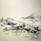George Stubbs - Study of a Fallen Tree Chromo-Lithography