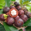 5 pcs of  sweet Mangosteen Seeds with Worldwide Shipping