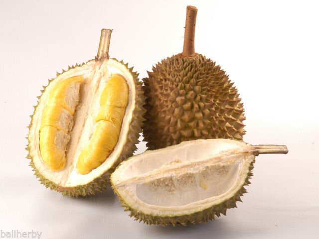 3 pcs of Durian Tree Flower Fruit Seeds Free Worldwide Shipping