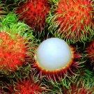 5 pcs of  Sweet Binjai  Rambutan Seeds with Worldwide Shipping