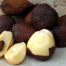 8 pcs Indonesian sweet Snake fruit / salak / Salacca Seeds w/ Worldwide Shipping