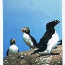 Newfoundland Gatherall's Boat Tours Icebergs Birds Whale Watching