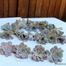 300 Rosette Succulents CUTTINGS 3 colors to choose Succulent Plants wedding