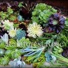 50 Succulent cuttings 12 unique varieties cactus succulent plants centerpiece