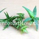 5 Aloe cuttings assorted mixed UNIQUE varieties Cactus Succulent plants