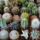 40 CACTI ONLY 20 unique varieties 2 inch pots cactus plants