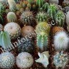 20 CACTUS ONLY 20 different varieties 2 inch pots mini plants