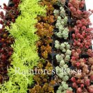 Sedum plants 72 assorted 6 unique varieties succulents USA grown lot Zone 4-9