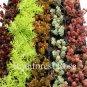 Sedum plants 72 assorted 6 unique varieties succulents USA grown lot Zone 4-9