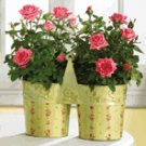 Metal Roses Pots with Handle