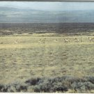 Wyoming 160 Acres! Great Hunting! Only $210/ac! Owner Will Carry!