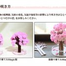 Magic Cherry Blossom Japanese Sakura mini  for Ivent, Oh, it is mysterious! NEW
