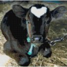 BABY ANGUS COW CROSS STITCH PATTERN PDF ONLY
