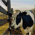 HOLSTEIN COW CROSS STITCH PATTERN PDF ONLY