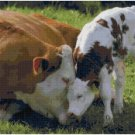 MAMA COW AND BABY #2  CROSS STITCH PATTERN PDF ONLY