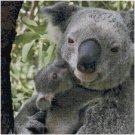 KOALA BEAR AND BABY #2 CROSS STITCH PATTERN PDF ONLY