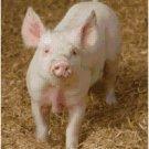 PIG #1 STITCH PATTERN PDF ONLY