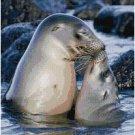 SEALS KISSING STITCH PATTERN PDF ONLY