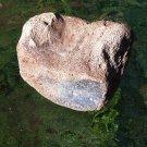 Metaxytherium floridanum (Manatee/Dugong/Sea Cow) Vetrebra Miocene, FLA, #0001
