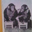 """Postcard-Vintage """"Baby Chimpanzees, St Louis Zoo black & white postcard"""