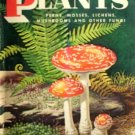 Non-Flowering Plants by Shuttleworth, Floyd S.