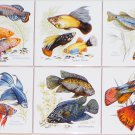"Tropical Aquarium Fish Ceramic Tile Accents 6 pieces 4.25"" x 4.25"" Kiln Fired"