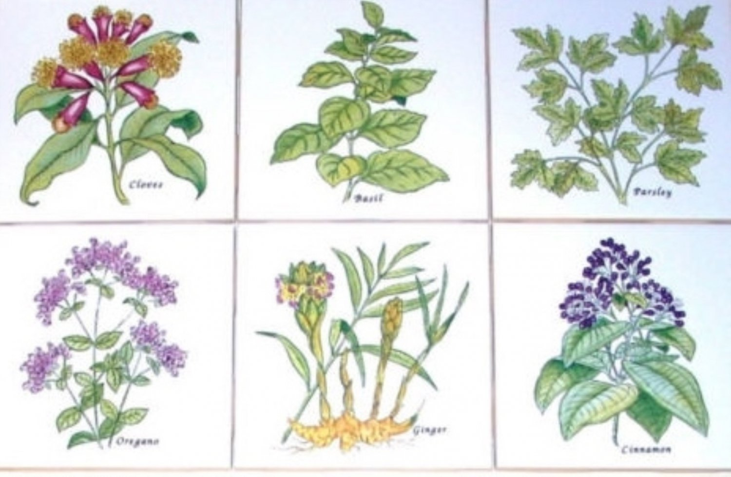 "Spice Herb Ceramic Tile 6 of 4.25"" Oregano Parsley Cloves Herb Kiln Fired Decor"