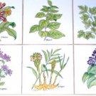 "Spice Herb Ceramic Tile 6 of 4.25"" Oregano Parsley Cloves Herb Kiln Fired Decor"