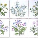 "Herb Botanical Ceramic Tile  4.25"" Sage Borage Rosemary Mustard Chamomile Coriander Flowe"