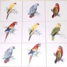 "Closeout Tropicial Bird Parrot  Ceramic Tile Back Splash 6"" Set of 9 Kiln Fired DECOR"