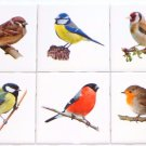 "Bird Ceramic Tile Assortment 4.25"" x 4.25"" Song Bird Collection Kiln Fired Decor"