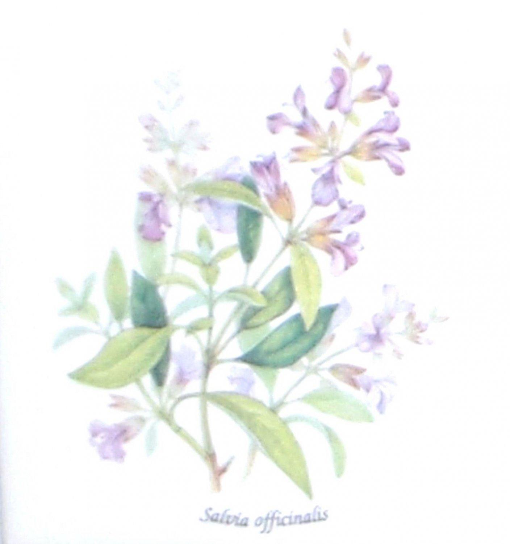 "Lavender Salvia Officinalis Ceramic Tile 4.25"" Herb Collection Kiln Fired Decor"