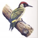 "Red King Fisher Bird 4.25"" Kiln Fired Back Splash Accent Ceramic Tile"
