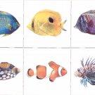 "Tropical Fish Ceramic Tile 6 of 6"" x 6"" Kiln Fired Back Splash Decor"