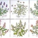 "Herb Ceramic Tile 4.25"" Basilicum Chamaemelum Lavendula Thymus Rosmarinus Salvia"