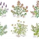 "Herb Ceramic Tile Botanical 4.25"" x 4.25"" Basilicum Chamaemelum Lavendula Thymus Rosmarinus Salvia"