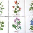 """Botanical Herb Kiln Fired Ceramic Tile 4.25""""x 4.25"""" Black Mustard, Mallow, Basil"""