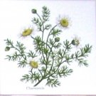 "Chamomile Herb Botanical Ceramic Tile 4.25"" x 4.25"" Kiln Fired"