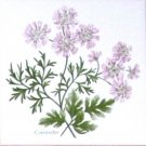 "Coriander Herb Botanical Ceramic Tile 4.25"" x 4.25"" Kiln Fired Decor"