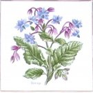 "Borage Herb Botanical Ceramic tile 4.25"" x 4.25"" Kiln fired decor"