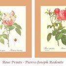 Pierre-Joseph Redoute Rose Prints
